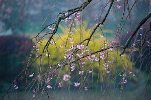 spring-1256806_640